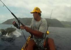 Un tiburón ataca la captura del pescador del Kayak