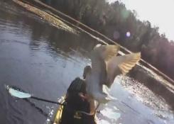 Ganso 1 Kayak 0